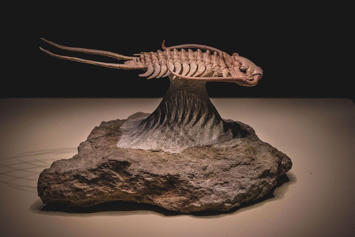 reproducción fosil